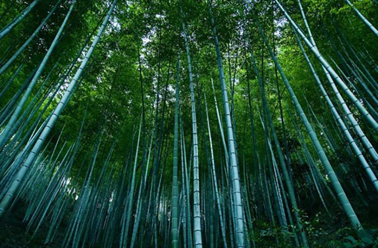 碧山旅行-《卧虎藏龙》竹林取景地