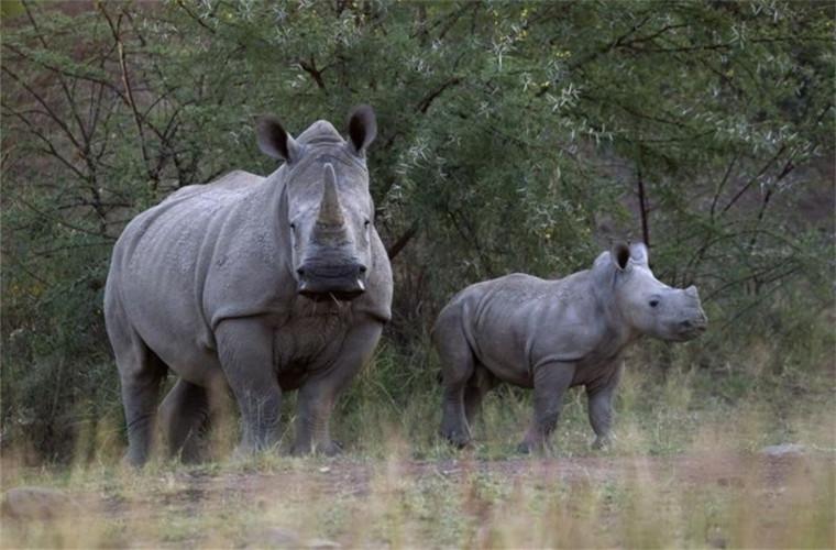 碧山旅行-肯尼亚旅游-西察沃国家公园