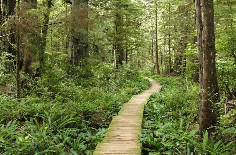 碧山旅行-走进原始森林