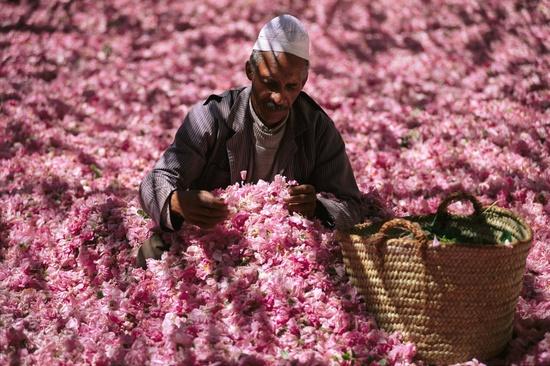 碧山旅行-非洲旅游-盛放的摩洛哥玫瑰花节