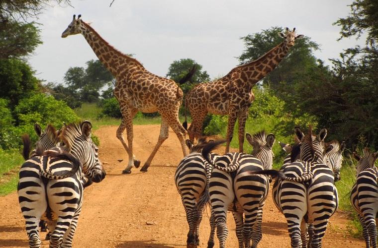 碧山旅行-非洲旅游-东非草原大迁徙