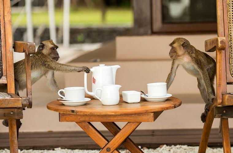 碧山旅行-下午茶时间