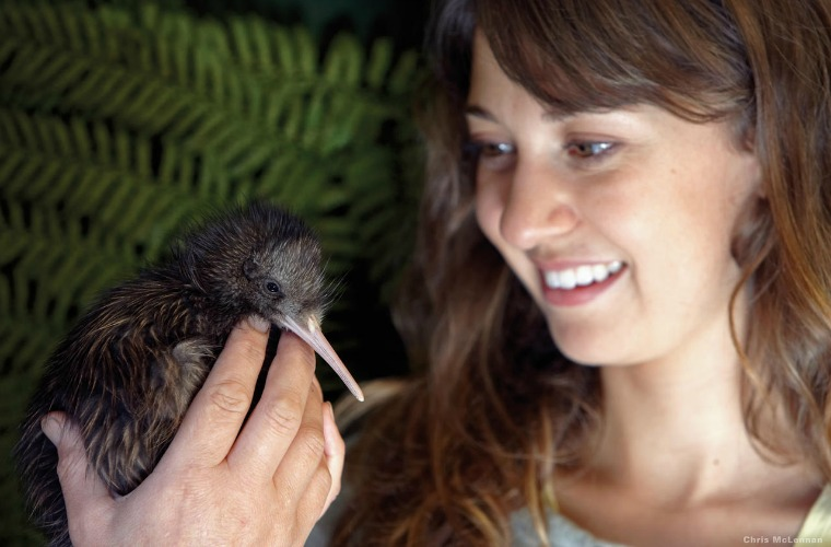碧山旅行-新西兰旅游-近距离窥探新西兰奇异鸟