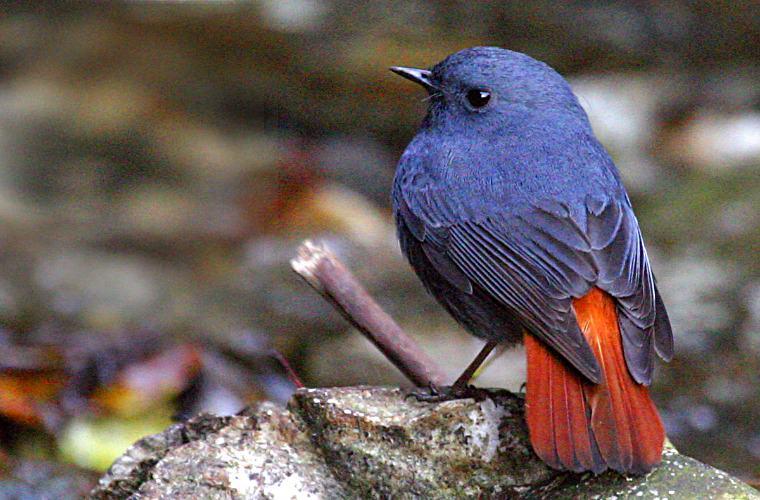 碧山旅行-不丹旅游-当地鸟类