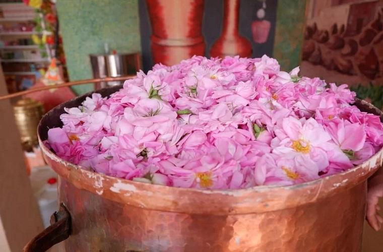 季节限定   大马士革玫瑰绽放的摩洛哥(五一招募)